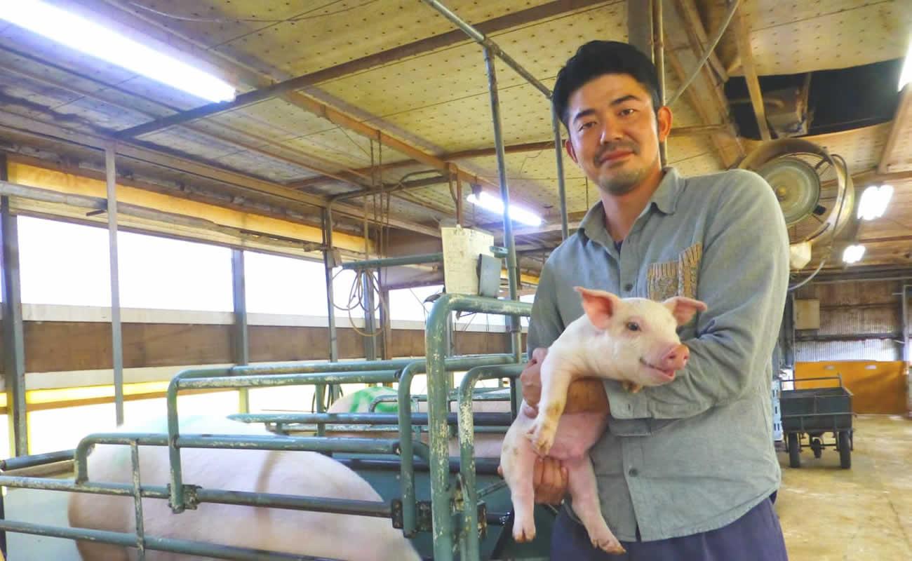 湘南ポークオリーブプレミアム|飼育の様子